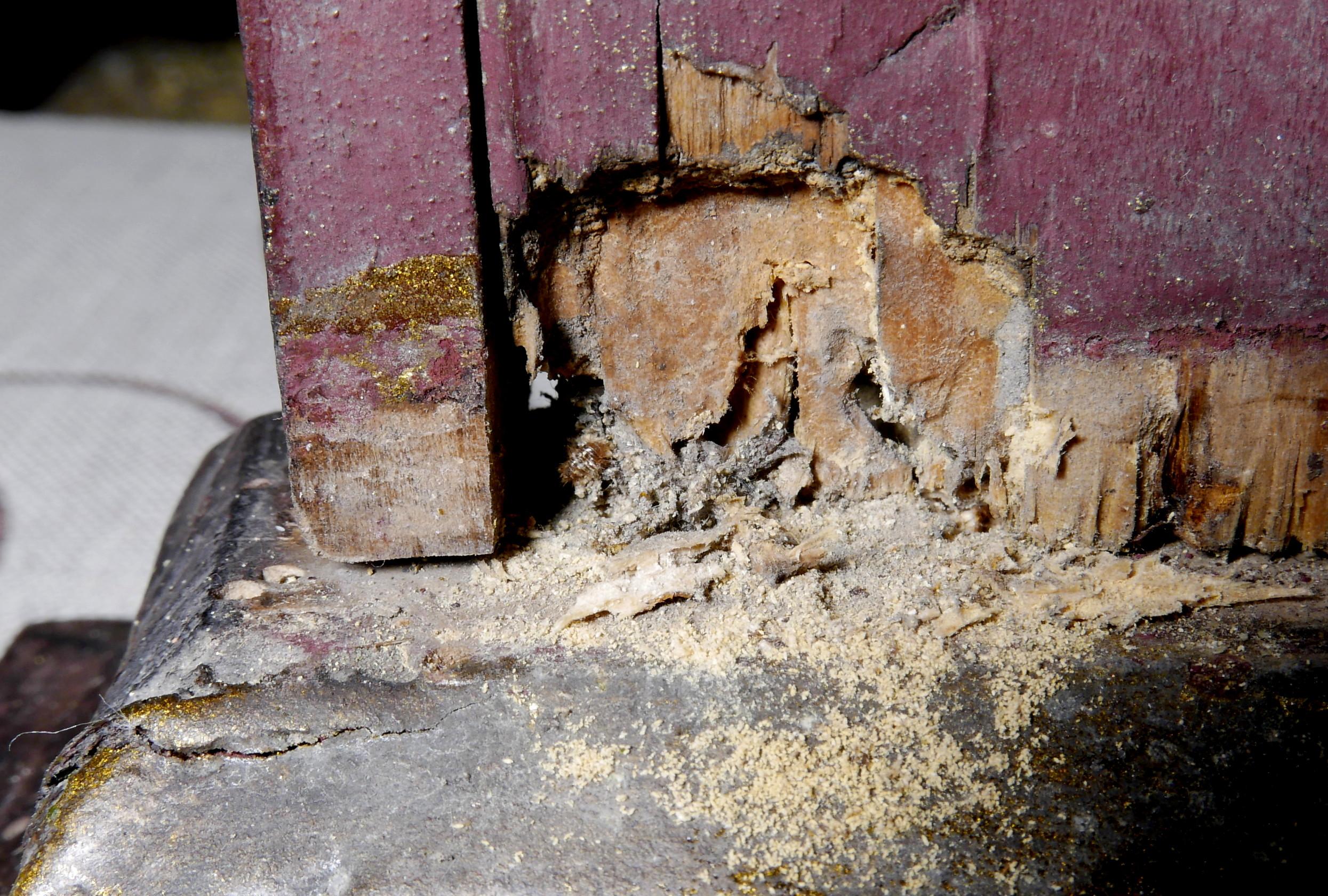 12'Zniszczenia drewna-cokołu2 -owady
